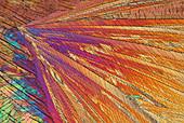 Acetanilide crystals, polarised light micrograph