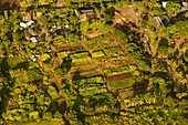Small-scale tropical farming, aerial photograph