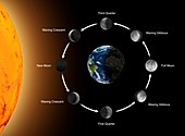 Phases of the Moon as seen from the Earth, illustration