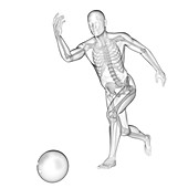 Person bowling, skeletal structure, illustration