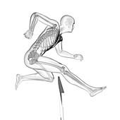 Person hurdling, skeletal system, illustration