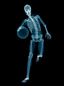 Basketball player's skeletal structure, illustration