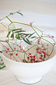 Pink peppercorns on a branch