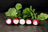 Gourmet Radish Fresh From the Garden