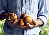 Farmer holding potatos in hands