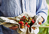 farmer holding freshly picked cherry tomatos in natural tea towel