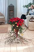 Weihnachtsstern im Korb auf Zweigen stehend