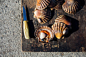 Scallops on a wooden board