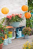 Terrasse mit Paprika, Chili und Dahlien