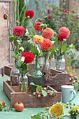 Blüten von Pompon-Dahlien in Flaschen