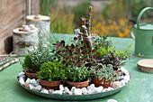 Topfgarten mit Mini-Pflanzen auf Zink-Schale mit Marmorkies