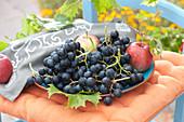 Schale mit frisch gepflückten Weintrauben und Äpfeln