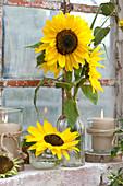 Sonnenblumen und Windlichter am Stallfenster