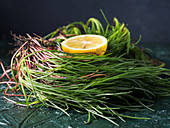 Italian agretti herb (barba di frate) on dark background with half lemon