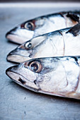 Three Mackerel Heads