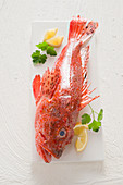 Dragon's head fish with lemon and parsley on a white board