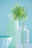 Frühlingsblume in Vase