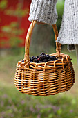 A basket of fresh blackberries