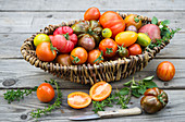 Freshly harvested colourful tomatoes in a basket