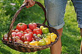 A woman carrying a basket of colourful tomatoes