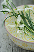 Snowdrops in a bowl