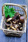 Freshly harvested chestnut mushrooms in a basket