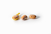 Three jackfruit kernels