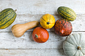 Various pumpkins on a white wooden background