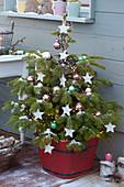 Nordmanntanne mit Sternen und Kugeln als Weihnachtsbaum