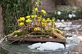 Winterlinge auf Terrassentisch als Frühlingsboten
