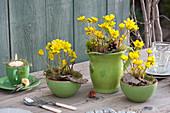 Winterlinge in grüner Keramik als Tischdeko