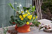 Kleine Vorfrühlingskombi mit Winterling und Schneeglöckchen