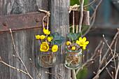 Kleine Gläschen mit Blüten von Winterling an Pfosten gehängt