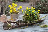 Winterlinge in Moos-Nest und Terracotta als Tischdeko