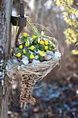Winterlinge und Schneeglöckchen im Spitzkorb aufgehängt