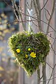 Moos-Herz mit Winterling an Baum gehängt