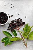 Elderberries on a branch