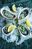 Fresh oysters with lemon on salt