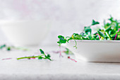 A bowl of fresh micro greens on a white background