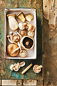Still life of mushrooms, Sjitake, Chestnut Mushroom, Oyster mushroom, Portobello