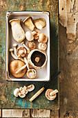 Verschiedene Pilze (Siitake, Kastanienpilz, Austernpilz, Portobello)