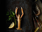 Langoustines with lemon, parsley and olive oil