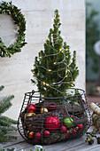 Zuckerhutfichte in Korb mit Christbaumkugeln und Rinde