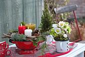 Kerzengesteck in Sieb und Christrose als Tischdeko