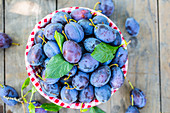 Blue and violet plums in the garden on wooden table