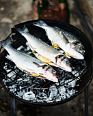 Fresh fish on a barbecue, garnished with lemon and rosemary