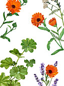 Calendula (marigolds), lady's mantle and lavender