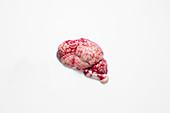 Calf's brain