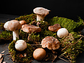 Various forest mushrooms on moss