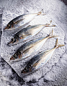 Mackerels on salt